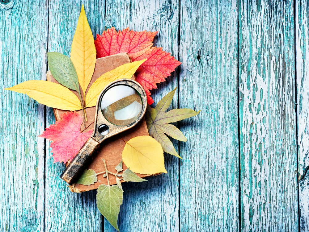 Stack of pressed autumn leaves with magnifying glass